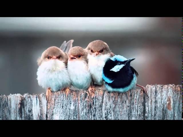 Необъяснимые животные видео.  5 НЕВЕРОЯТНЫХ СПОСОБОВ ОБЩЕНИЯ ЖИВОТНЫХ