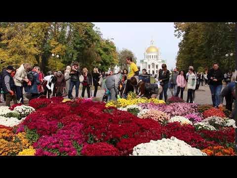 Новости Полтавы на 0532.ua: У Полтаві провели фестиваль хризантем
