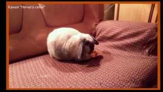 видео Что кролик ест кроме морковки?