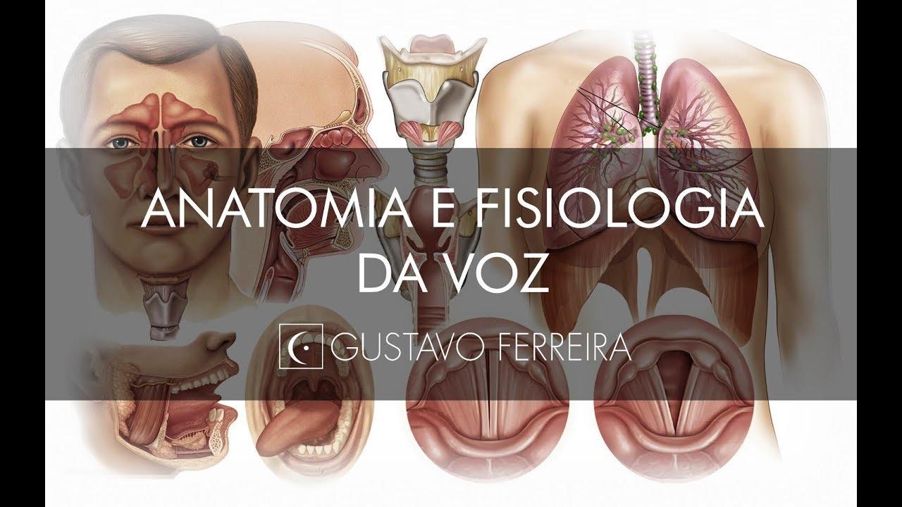 AULA DE ANATOMIA E FISIOLOGIA DA VOZ - Gustavo Ferreira - YouTube