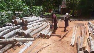 Sri  Lanka,ශ්රී ලංකා,ceylon,sawmill Lumber Yard Coconut Wood