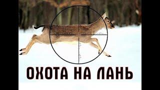 Зимняя охота на Лань Охотхозяйство Неман Белый лось