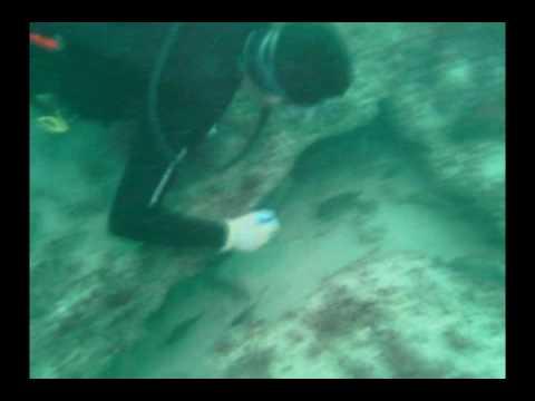 Spear Fishing 6 Mile Reef Stuart, Florida
