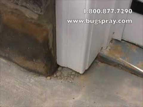 Carpenterant treatment using Drione Dust
