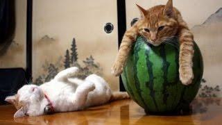 Смешные Приколы с Кошками. Эти Забавные Животные | Автозаработок Андроид