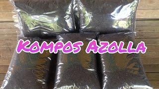 Image result for gambar bertani dengan pupuk azolla