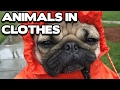 Funny Animals in Clothes Compilation (BEST FUNNY ANIMAL COMPILATION)