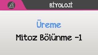 reme-mitoz-blnme-1