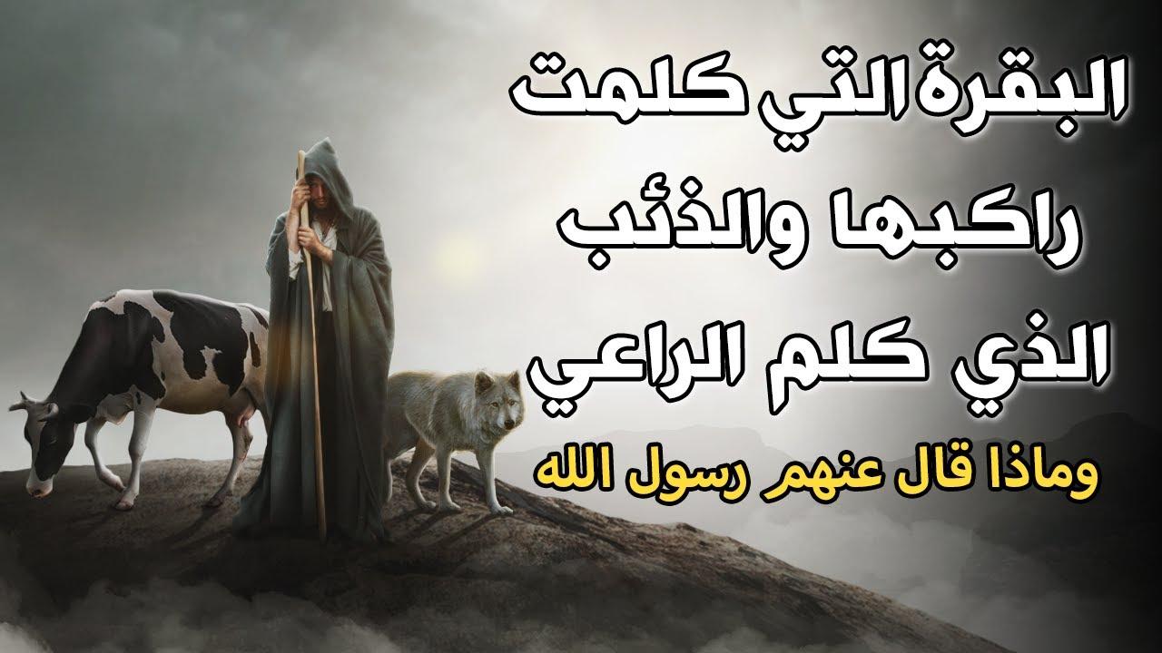 قصة البقرة التي كلمت راكبها والذئب الذي كلم الراعي !!  وماذا قال عنهم رسول الله ﷺ .. قصة تبكي القلوب