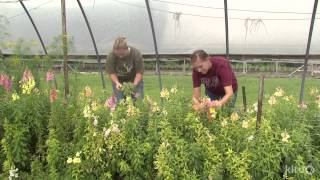 Flower farm | Cuts of Color |Central Texas Gardener