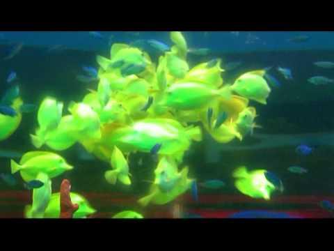 Florida Aquarium :30