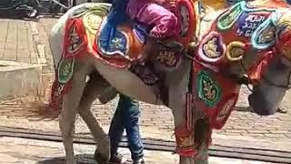 Download Video menolak untuk tersisihkan . #kuda #kudarenggong bandung khitanan MP3 3GP MP4