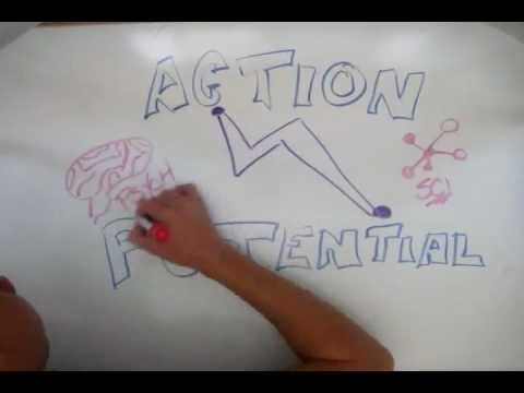 Action Potential: Mind to Mind, Idea to Idea - JTC Self-Branding