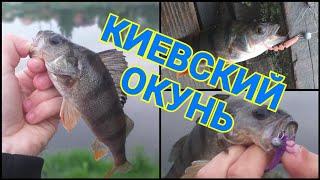 Ловля окуня в Києві на озері