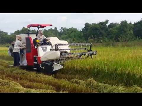 Máy gặt Yanmar AW70V cắt lúa tại Tây Ninh (LH:0937 413 768)