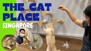 THE CAT PLACE : SINGAPORE