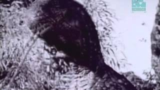 Paleoworld- Mistaken Identity