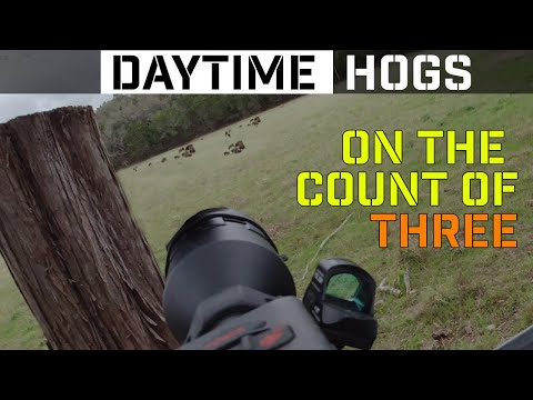 On the count of three | Texas Feral Hog Hunting