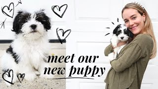 WE GOT A PUPPY! Bringing home our 9 week old Havanese puppy | @katieflute vlogs