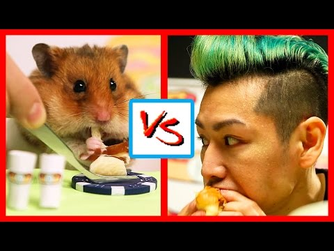man eats tiny hamster
