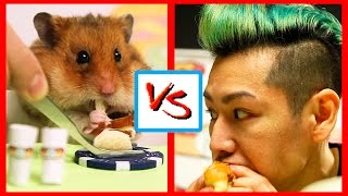 TINY HAMSTER Eats Hot Dogs VS KOBAYASHI! | What's Trending Now!