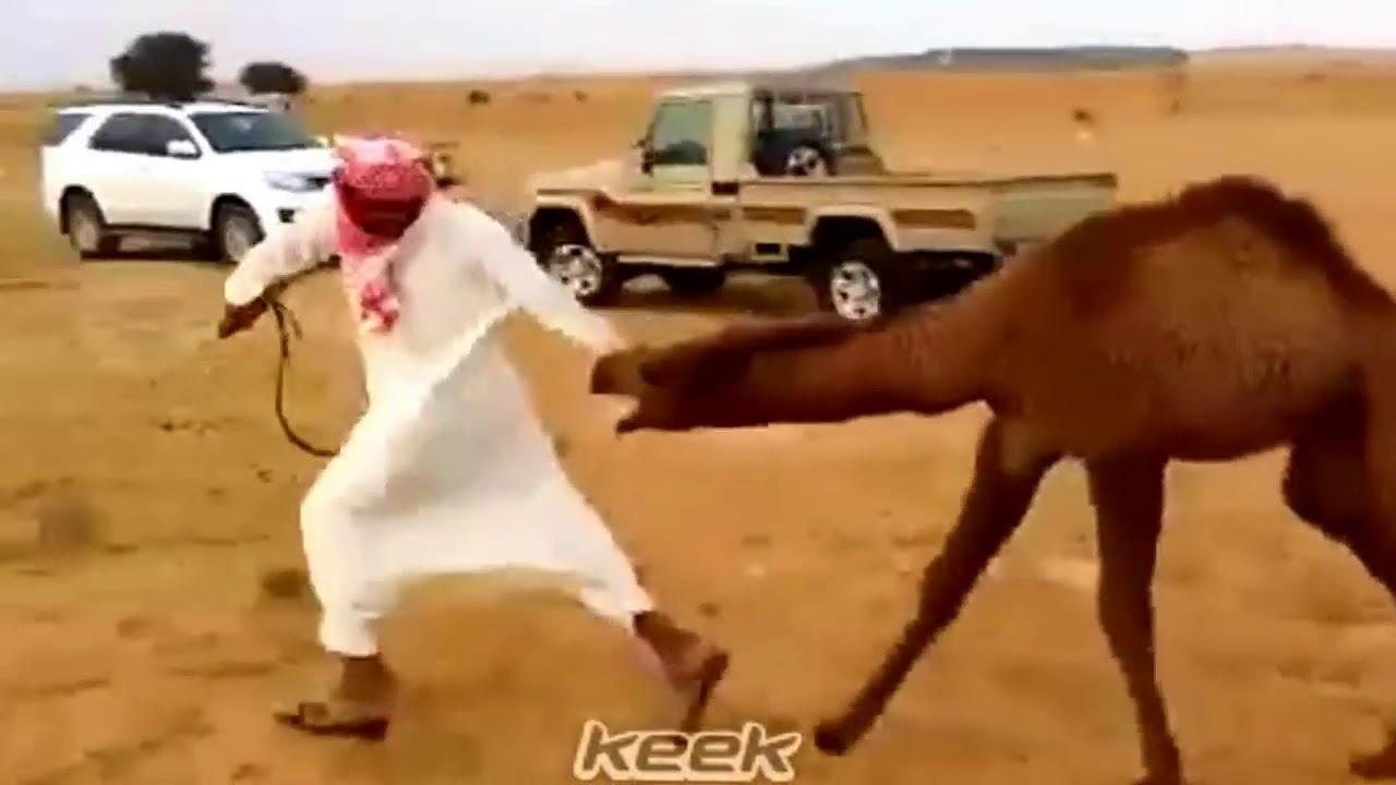 ابل بعارين ناقه مع شيله حالات واتس اب اشترك في القناة تحميل