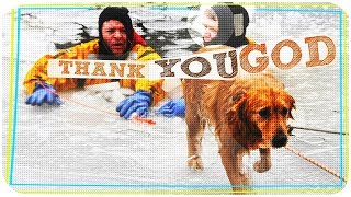 dog rescue videos  save dogs life stories with happy endings