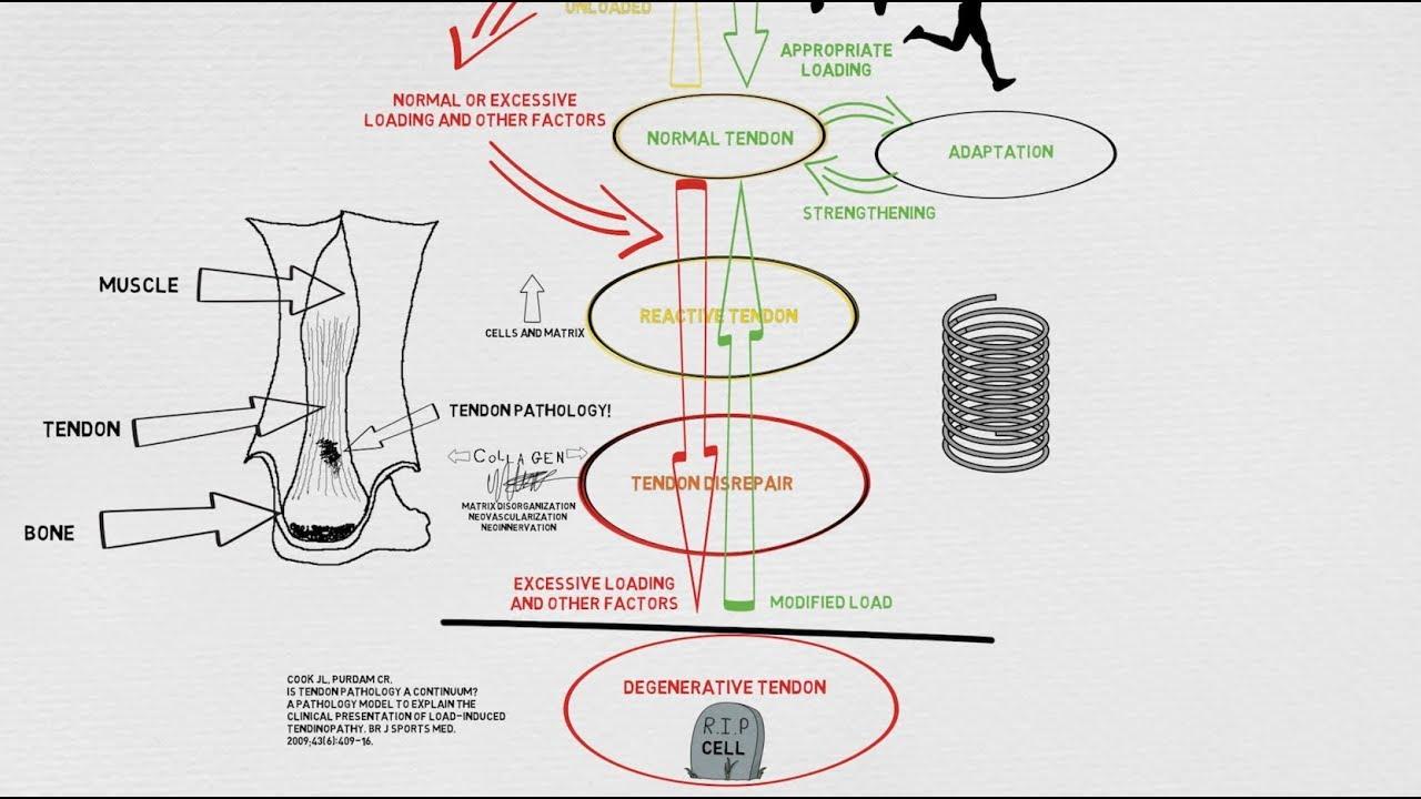 Patogenezis – Wikipédia Teniosis etiológia patogenezis