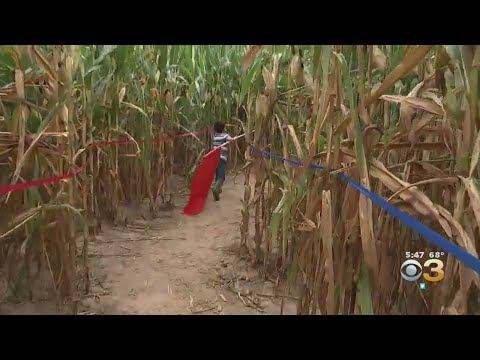 Howell Living History Farm Offers Longest-Running Corn Maze In New Jersey