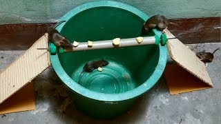 The Rolling Log Mouse Trap In Action | bucket mouse trap using pvc pipe | Stupid Mouse Trap