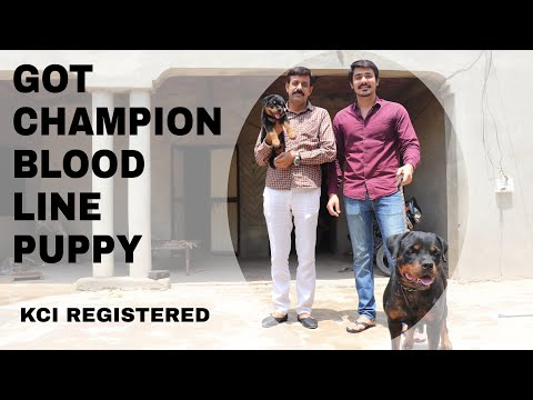 I GOT A NEW ROTTWEILER PUPPY |K.C.I. REGISTERED MY NEW PET | WORLD BEST GUARD DOG | VOLG # 1