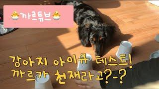 까르튜브 | 강아지 아이큐 테스트 | 닥스훈트가 천재라…