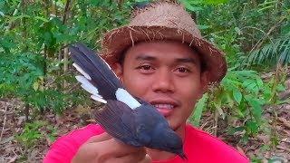 TERBAIK pikat burung murai batu di hutan bersama KOPASUS