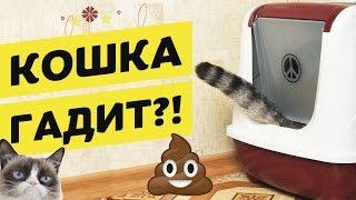 Кот ходит в туалет в неположенном месте