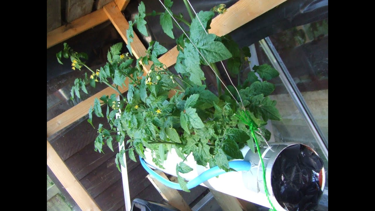 Hydroponics NFT growing system homemade