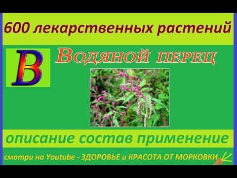 водяной перец 600 лекарственных растений