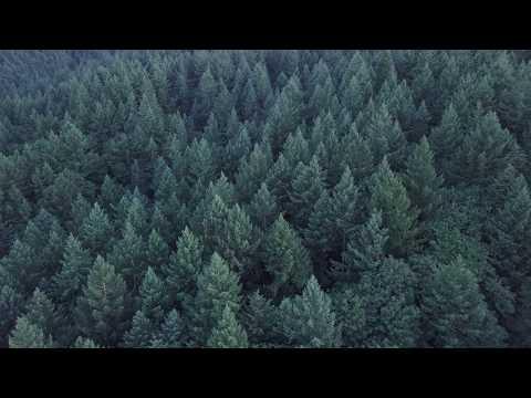 Forest Park in 4k - Portland, Oregon