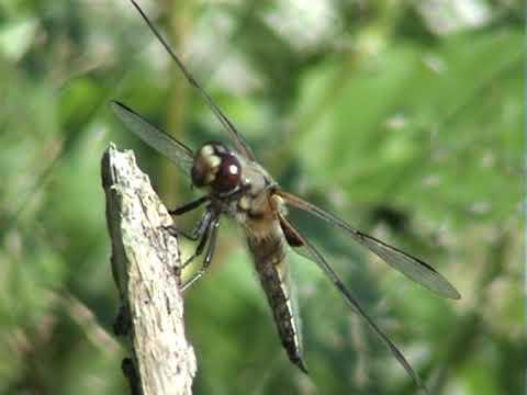 Download laumzirgis ir drugelis