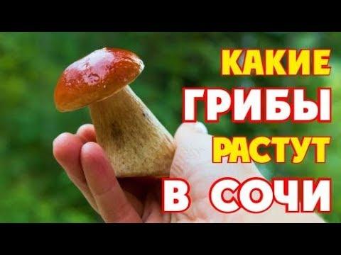 КАКИЕ ГРИБЫ РАСТУТ В СОЧИ / ЦАРСКИЙ ГРИБ И ВСЕ ВСЕ ВСЕ))