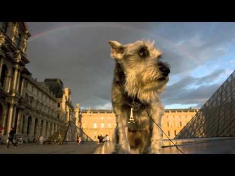 i Love Dogs Presents The Schnauzer