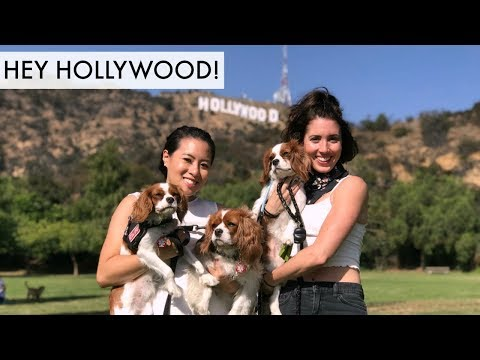 Things to do with your dog IN HOLLYWOOD CALIFORNIA | Dog Friendly Activities Pet Friendly