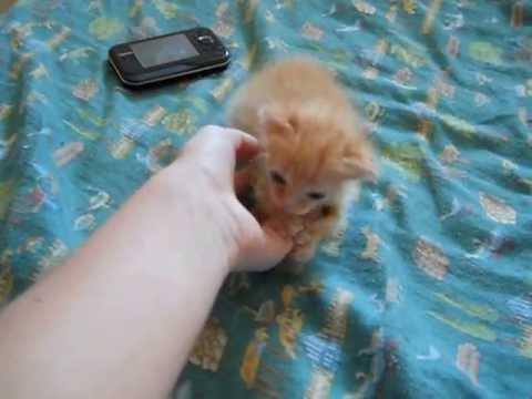 Gattino Di Nemmeno 40 Giorni Youtube