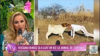 Teo Show (14.01.2020) - Rocsana Marcu si-a luat un ied ca animal de companie!