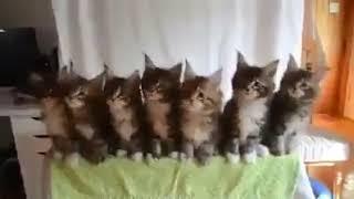 Кошки танцуют   прикол,ржака