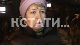 Из-за бешеной лисы растерзанной собаками в Приокском районе объявлен карантин(, 2016-12-21T17:09:03.000Z)
