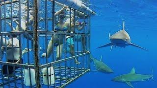 Las atracciones turisticas con animales mas peligrosas del mundo