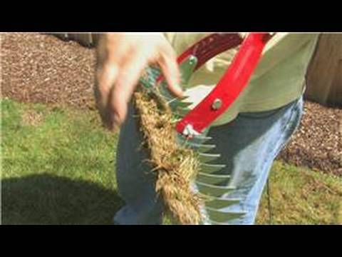 Lawn Care & Landscaping : How to De-Thatch a Lawn