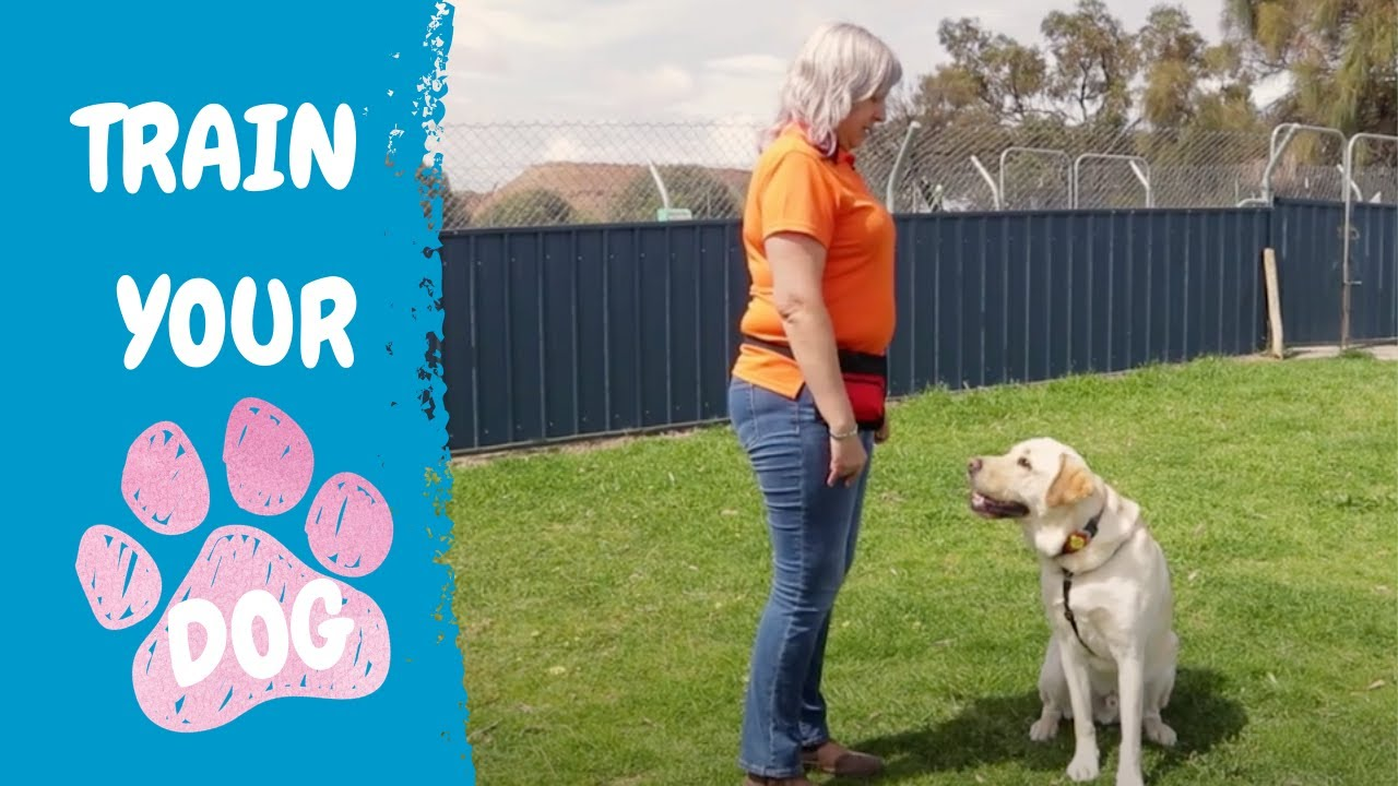Lead by Example - RSPCA South Australia