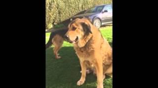 Ainhoa Arteta con LASA, Asociacion de Animales