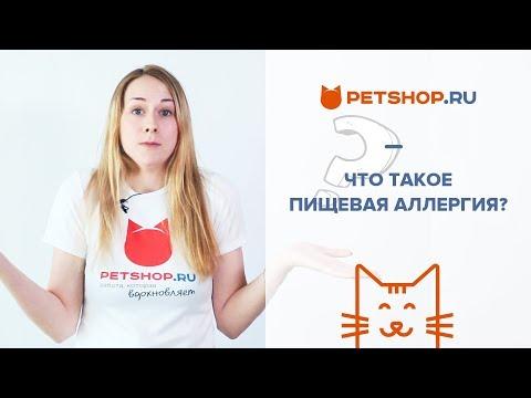 Запор у кота. Почему нельзя давать людское слабительное